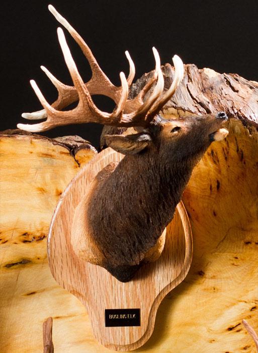 Bugling Elk Bust