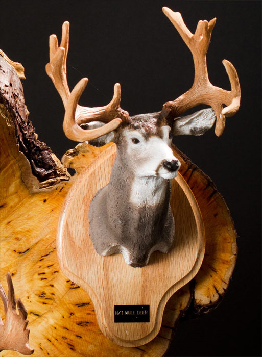 Non-Typical Mule Deer Bust