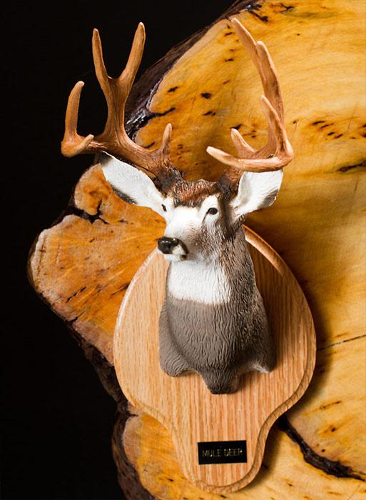 Typical Mule Deer Bust